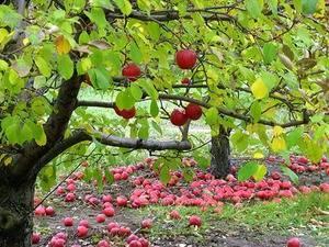 Как правильно обеспечить уход за яблоней – пошаговая инструкция