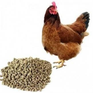 Комбикорм для кур: состав по госту. как сделать комбикорм для несушек своими руками? как кормить цыплят с первых дней жизни?