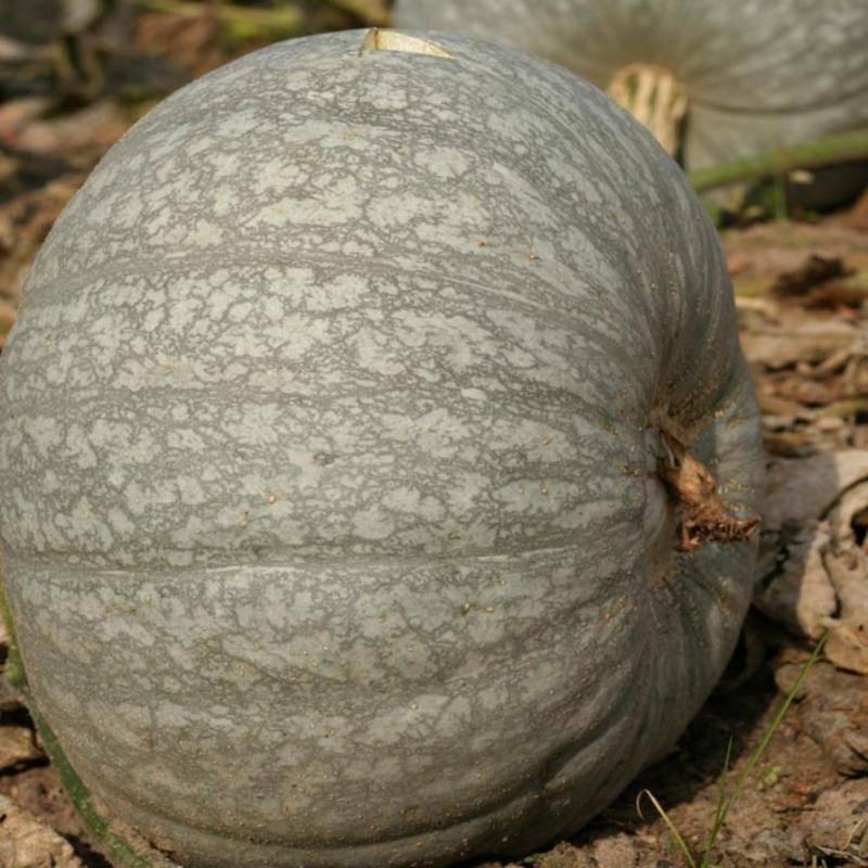 Семена тыквы — лечебные свойства и противопоказания для мужчин и женщин