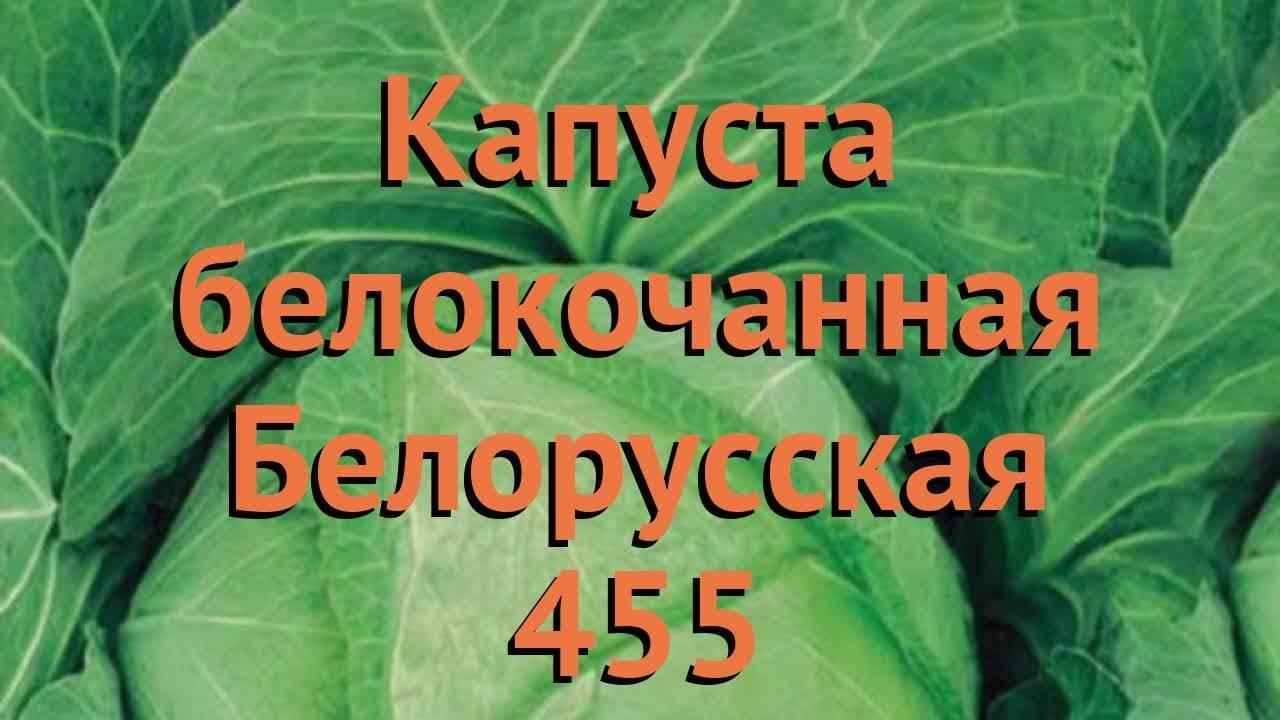 Лучшие сорта капусты белокочанной