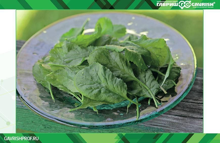 Кресс-салат — википедия с видео // wiki 2