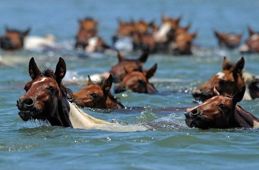 Сонник плавать с лошадью. к чему снится плавать с лошадью видеть во сне - сонник дома солнца