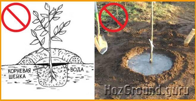 Как посадить абрикос и правильно ухаживать за ним в холодном климате?
