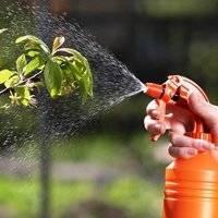 Как обрабатывать вишню весной от вредителей и болезней, опрыскивание