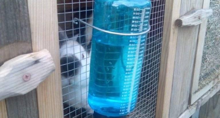 Приспособления для кроликов, самодельные кормушки и поилки