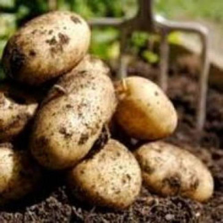 Хранение картофеля. как и где хранить картофель?