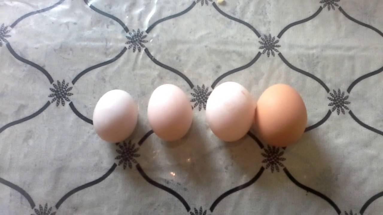 Почему куры несут двухжелтковые яйца - причины и последствия