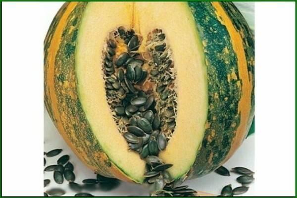 Все о тыкве россиянке: описание сорта, выращивание и уход, агротехника