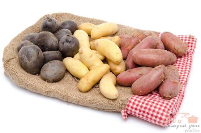 Сорта картофеля, устойчивые к колорадскому жуку − миф или реальность?