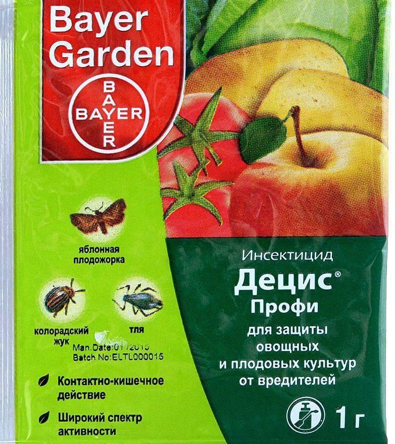 На помидорах черные мошки и белые мошки – основные особенности и 3 народных средства для защиты