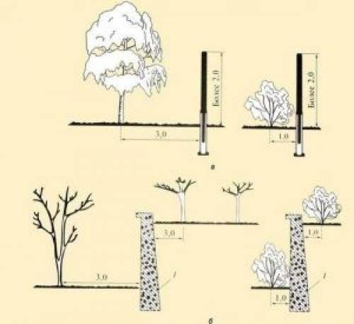 Правильное расстояние между яблонями при посадке: особенности и рекомендации