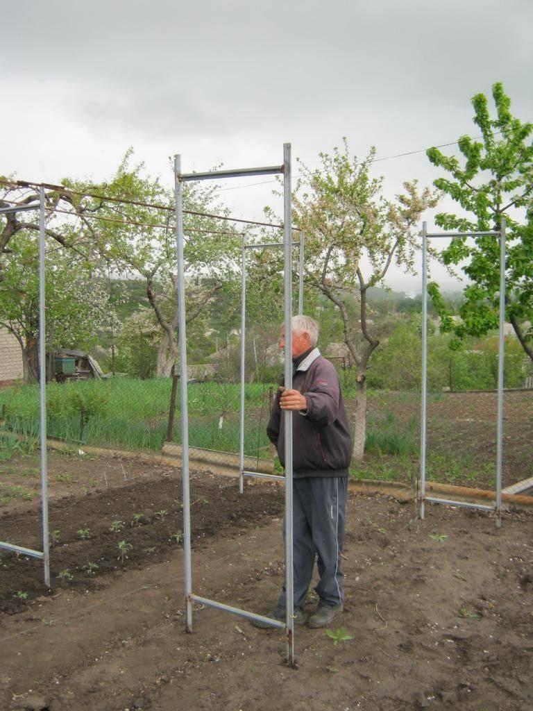 Виды и правильные размеры опор для винограда с фото
