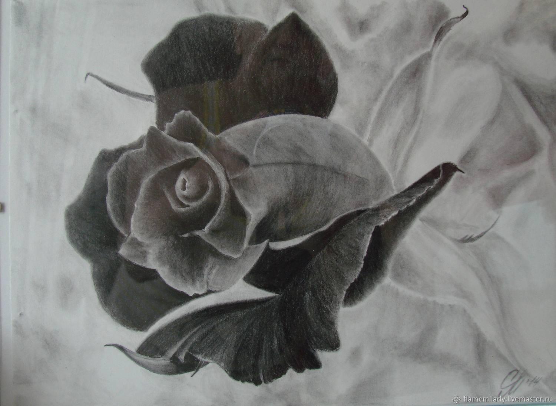 Что означают черные розы и когда их дарят
