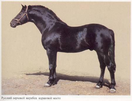 Новоалтайская порода лошадей