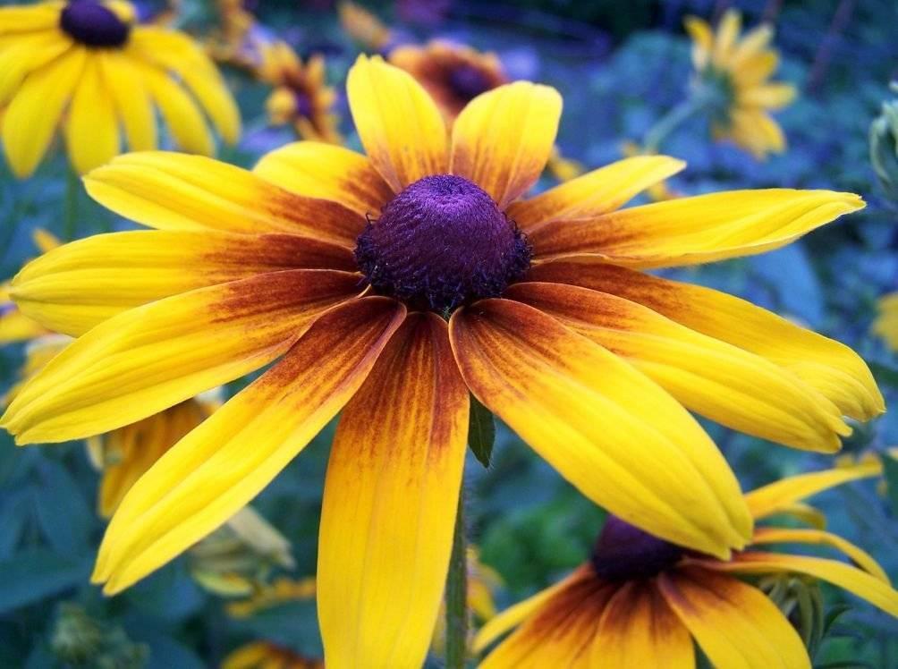 Многолетние садовые цветы: фото и описание - энциклопедия цветов