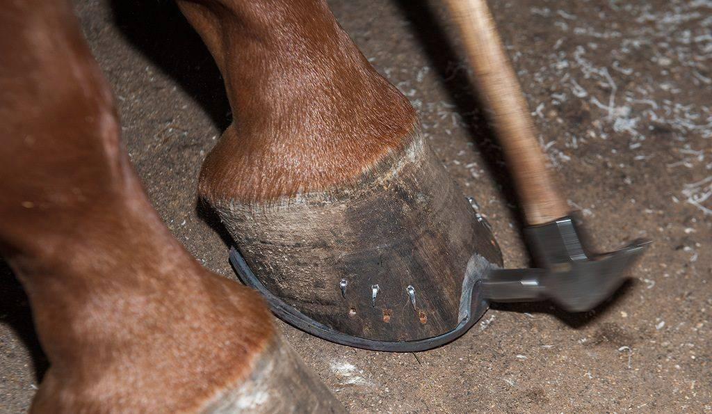 Зачем нужно подковывать лошадь и как это делать?