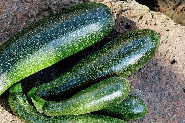 Как получить ранний урожай кабачков