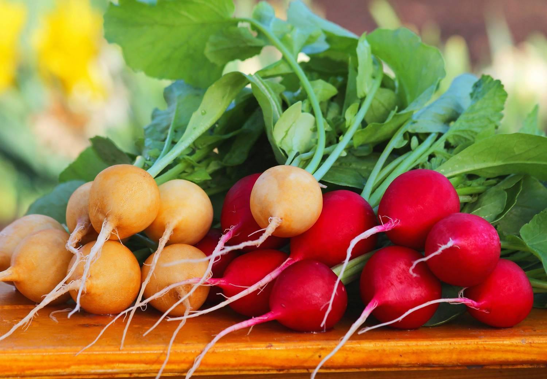 Как правильно сажать редиску ранней весной? какие выбрать сорта?