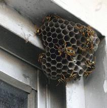 Как избавиться от пчел соседа: как отравить пчел, чего боятся пчелы, какие запахи не любят, как прогнать и уничтожить пчел