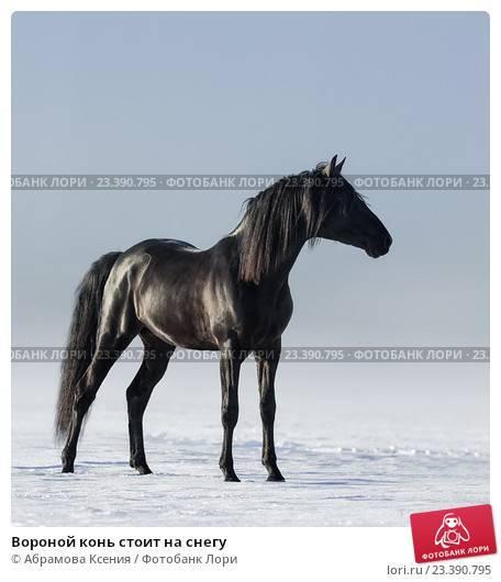 Стихи воронной конь - сборник красивых стихов в доме солнца