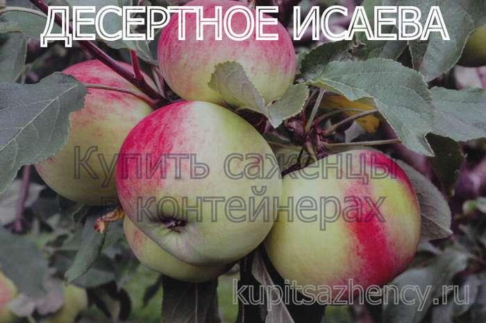 Сорта яблони профессора е. с. черненко   плодовый сад