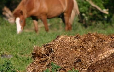 Подкормка огурцов коровяком и другими видами навоза