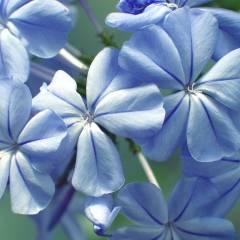 Сине-голубой цвет и сочетание с ним