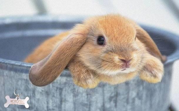Основные принципы ухода за кроликом