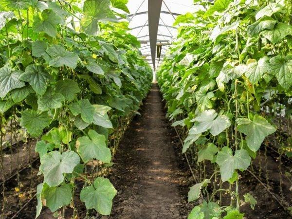 Эффективное замачивание семян перед посадкой: все способы и секреты