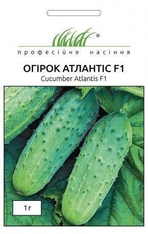 Огурец атлантис f1 высокопродуктивный гибрид