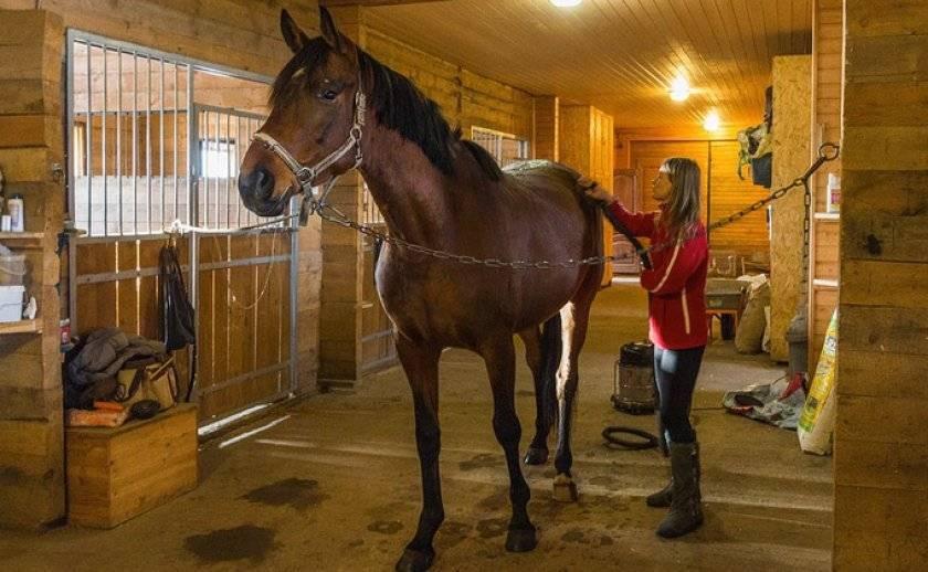 Как я стал разведением лошадей заниматься, что из этого вышло, и когда коневодство бизнесом становится