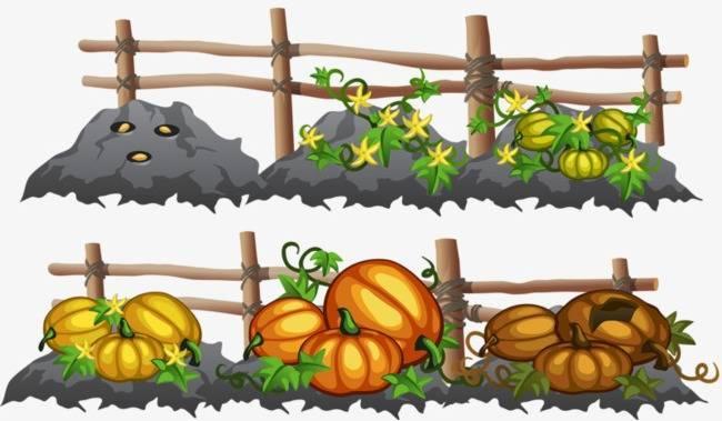 Актуальная информация когда сажать тыкву семенами и рассадой в открытый грунт