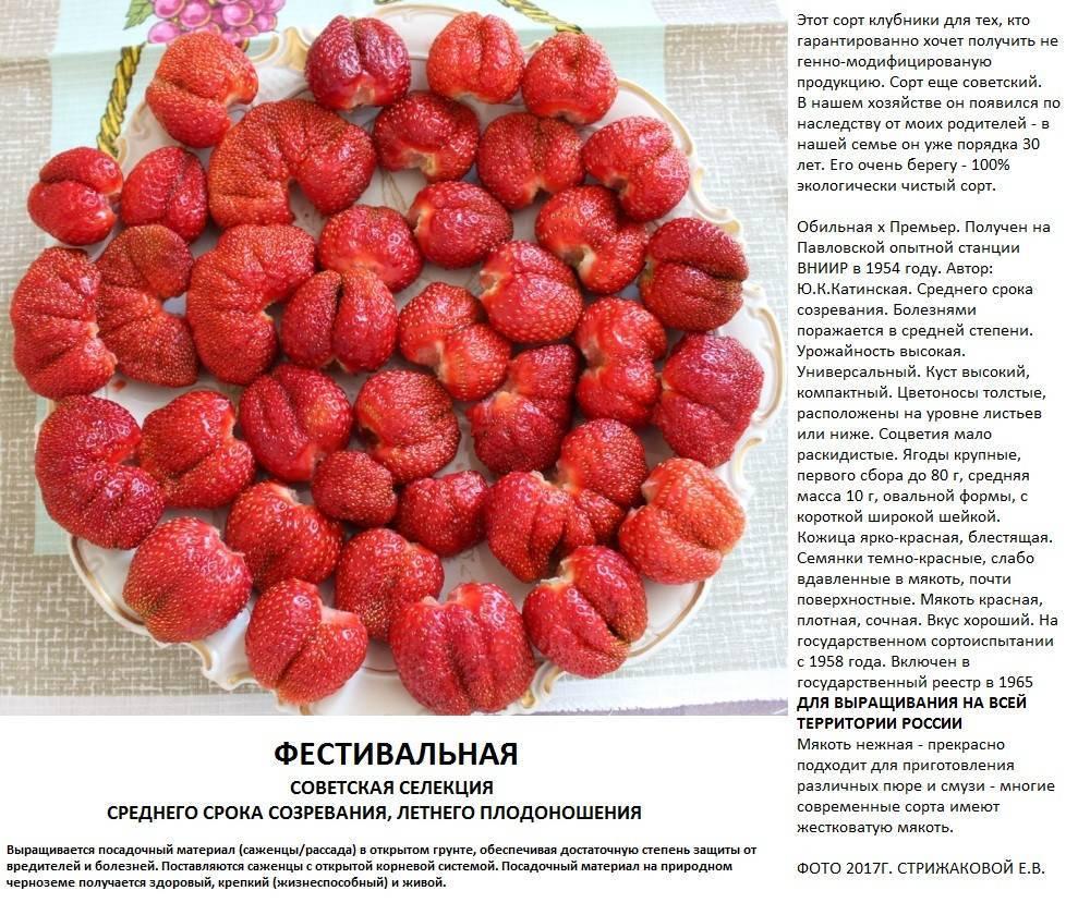 Сорт клубники «фестивальная»: как получить достойный урожай