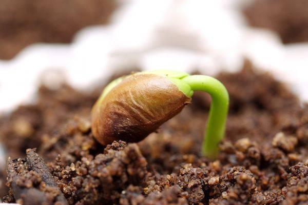 Посадка семян на рассаду