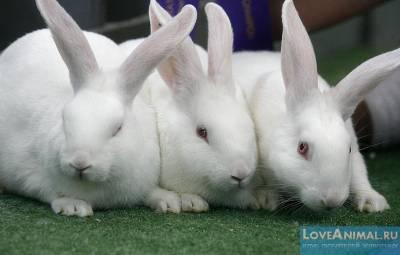 Падеж кроликов без видимых признаков болезни: дохнут крольчата