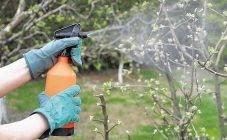 Правильный полив винограда обеспечит крупные грозди и не даст кустам страдать от засухи
