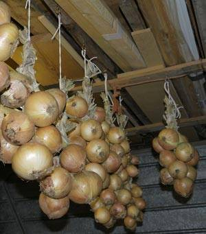 Все о хранении лука в домашних условиях: какие сорта лучше хранятся
