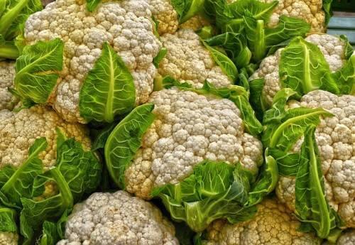 Выращивание цветной капусты в открытом грунте