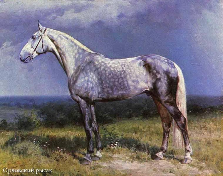 Орловский рысак: «великая лошадь россии»