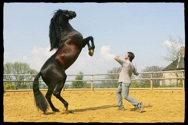 Мустанг (лошадь): описание породы и фото