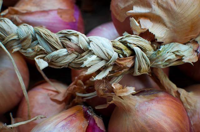 Все про обрезку лука севка перед посевом: как правильно обрезать