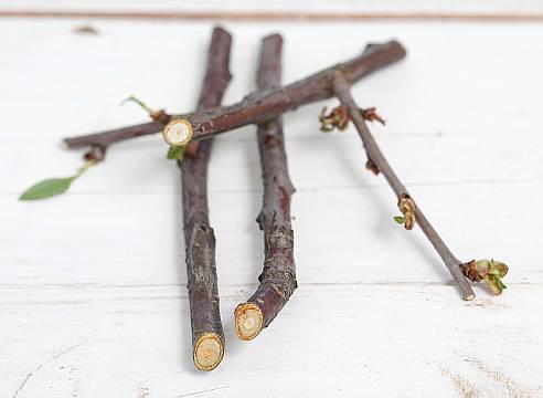 Монилиоз вишни: как лечить вызванную грибками плодовую гниль