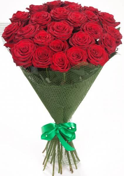 Роза аскот (ascot) — что за сорт, характеристики