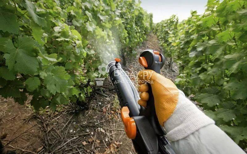 Какими удобрениями лучше всего подкормить виноград летом