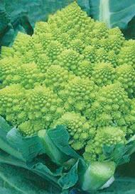 Виды капусты: фото, описание и полезные свойства