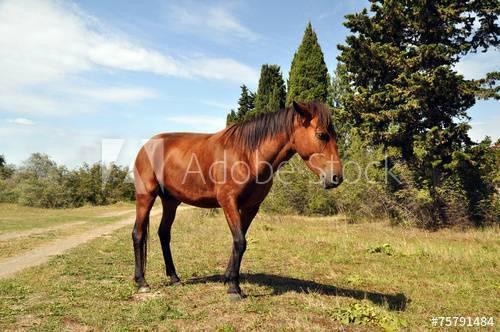 Лошадь в яблоках (33 фото): серая и белая, рыжая, вороная и другие масти лошадей в яблоках