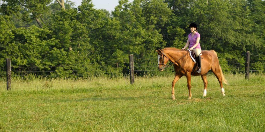 Управлять лошадью