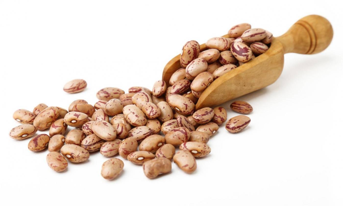 Кто съел бобовые: вся правда о фасолевой зерновке