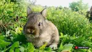 «байкокс» для кроликов