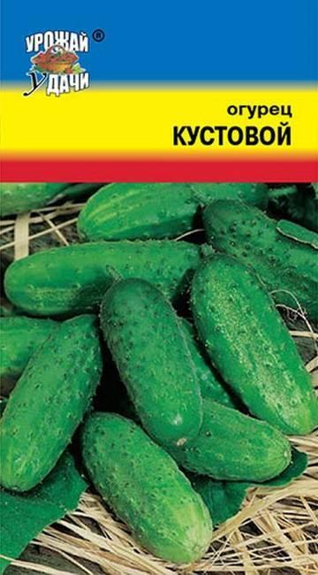 Выращивания, характеристика и описание огурца сорта кустовой